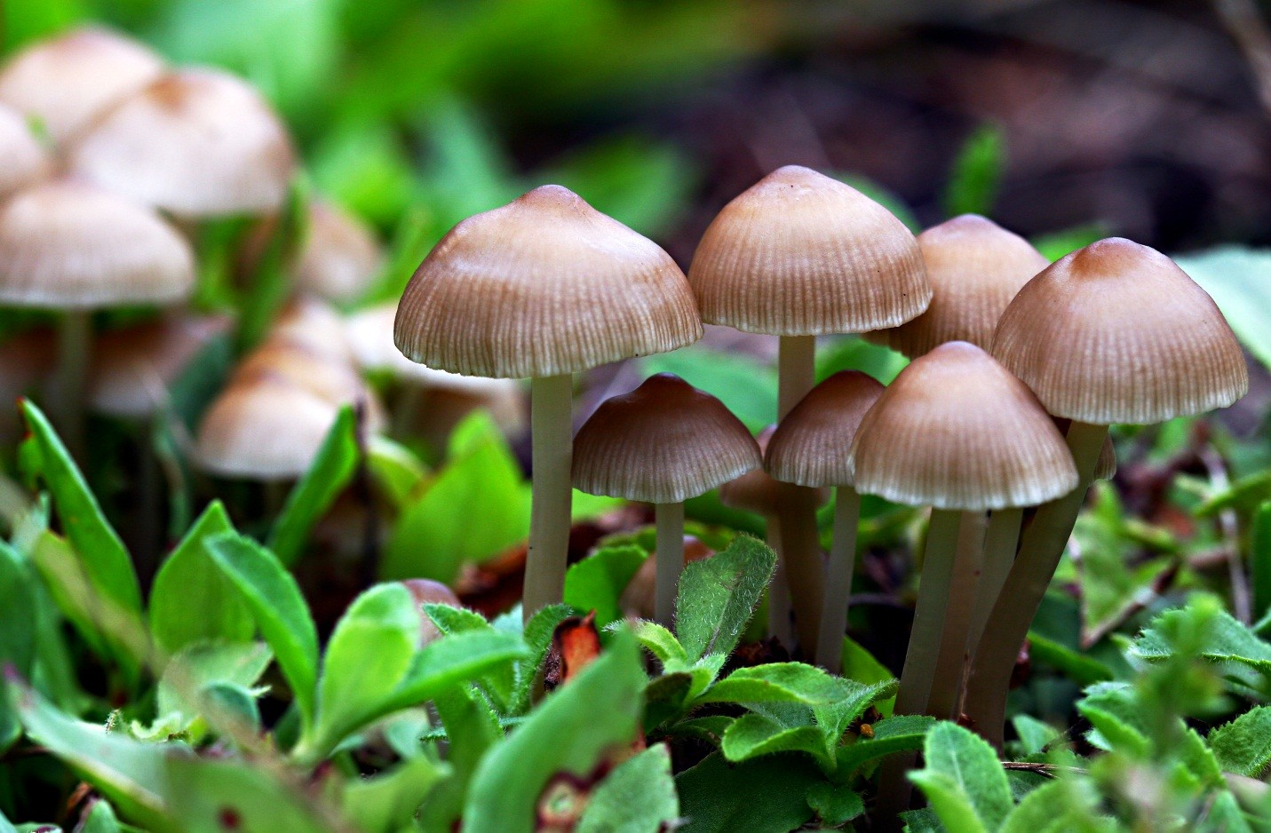 10 Most Bizarre Mushrooms And Fungi You Should Definitely Check