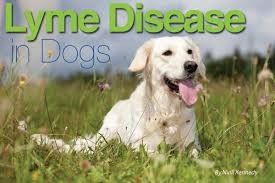 Lyme Disease Symptoms in Dogs and The 10 Most Serious Pet Diseases that every Dog Lover Should Know