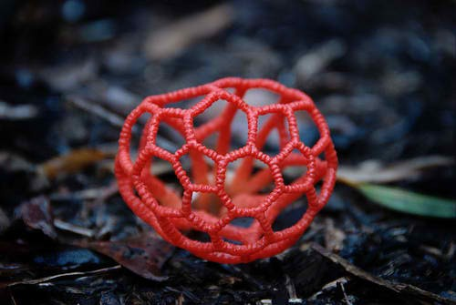 Red Cage Fungus
